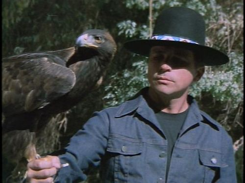Billy Jack hawk.jpg